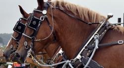 馬具での使用例3