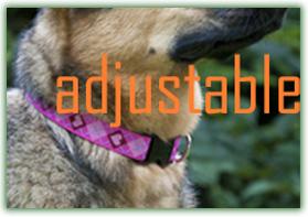 LUPINE 大型犬用アジャスタブルカラー